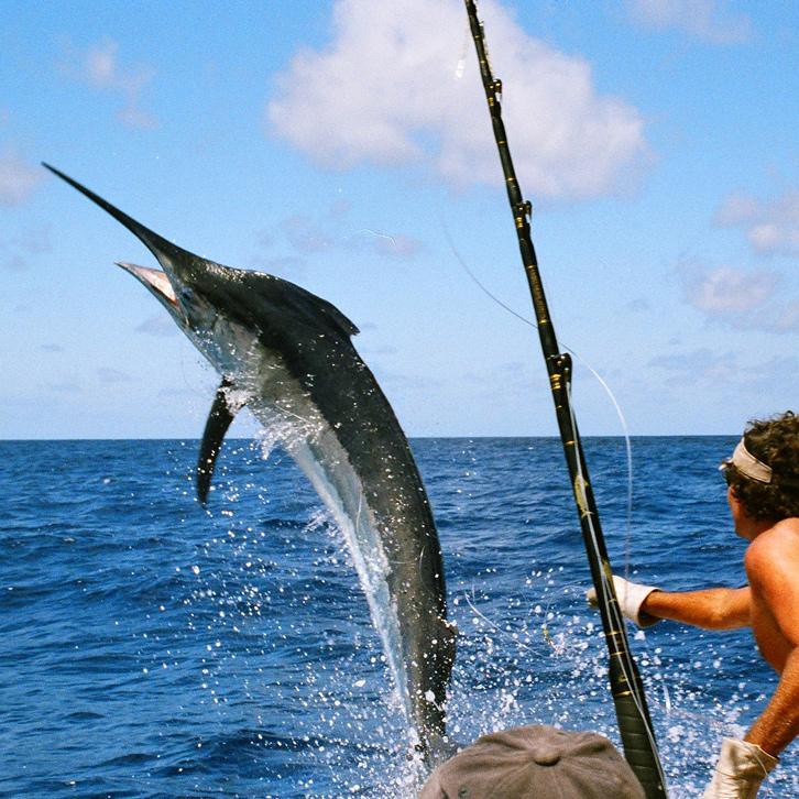 Things to do st thomas st john u s virgin islands for Deep sea fishing st thomas