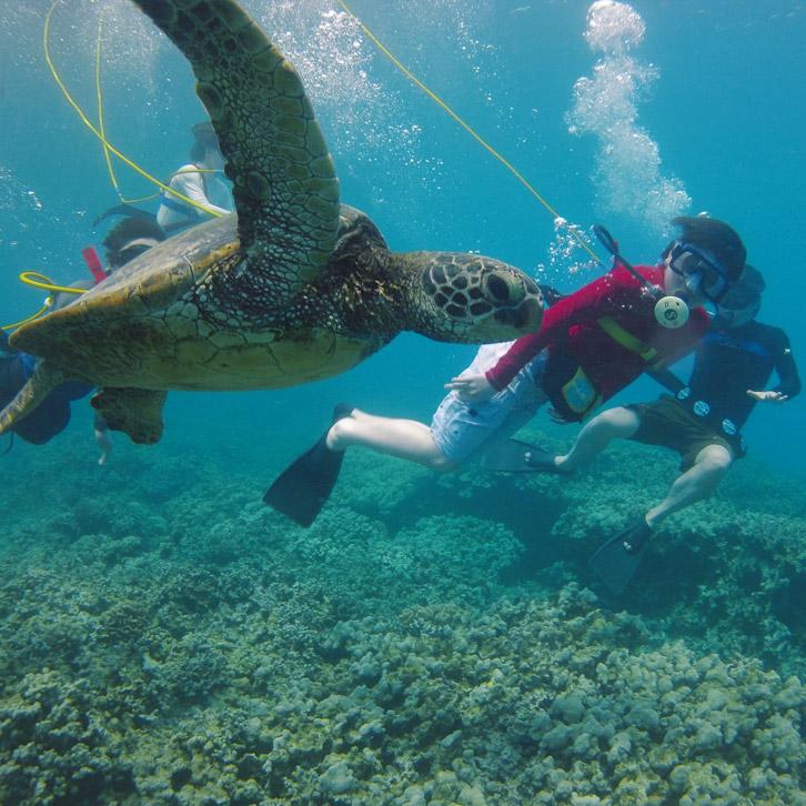 Snorkeling In St Thomas Us Virgin Islands
